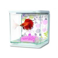 Akvárium Betta Marina Kit Floral 2 l